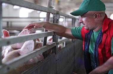 pig farm consultancy