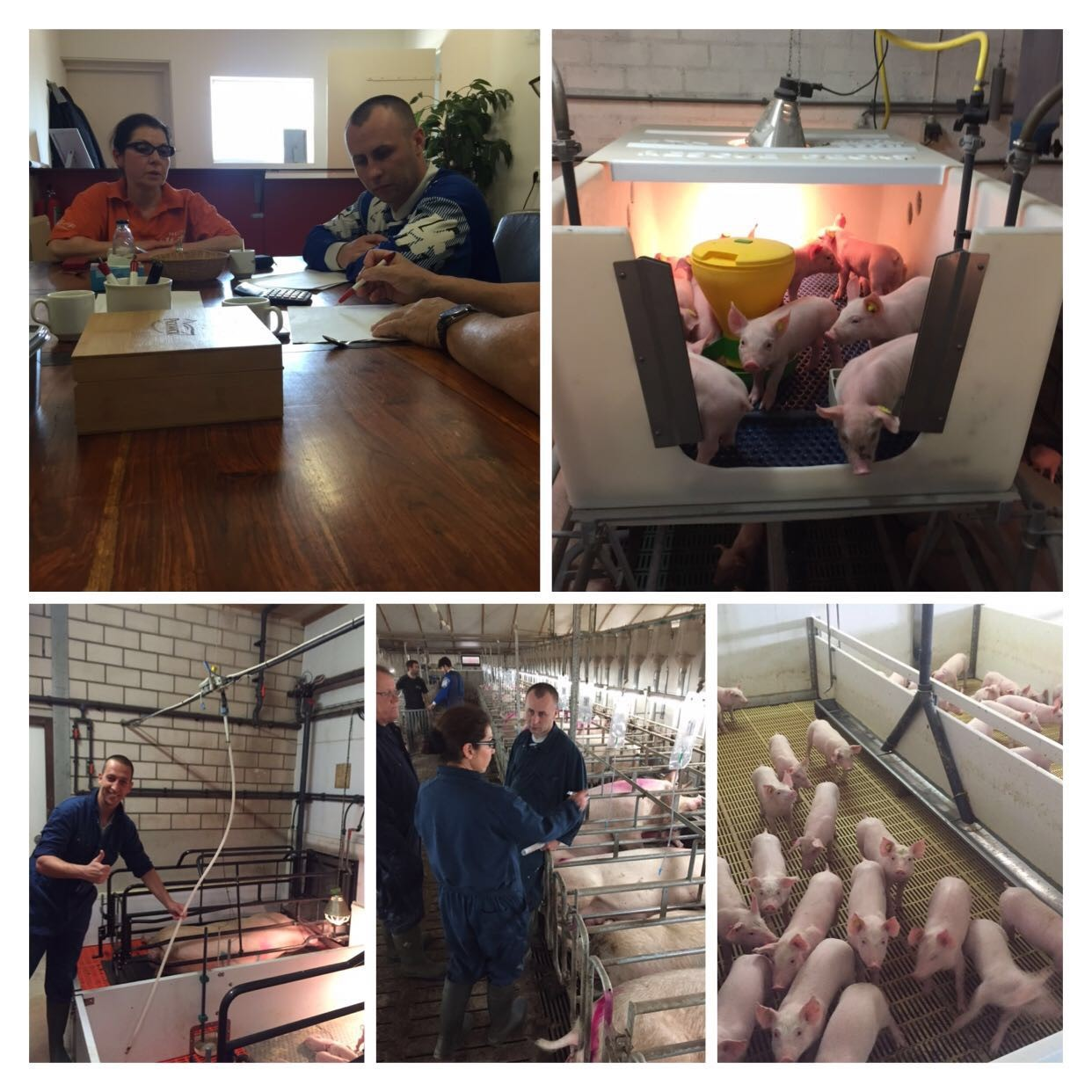 knowledge-and-skills-in-pig-farming